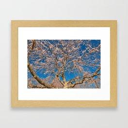 Cherry Blossom Tree Framed Art Print