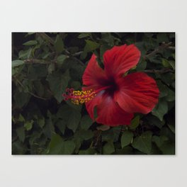 The core of Love Canvas Print