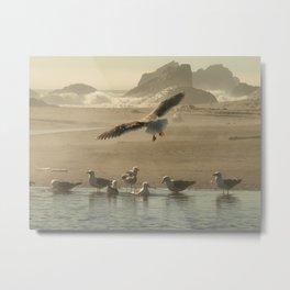 Seagull On the Beach... Metal Print
