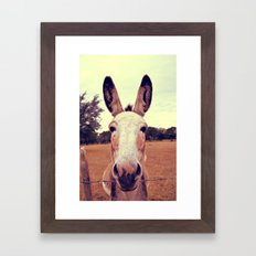 a curious donkey. Framed Art Print