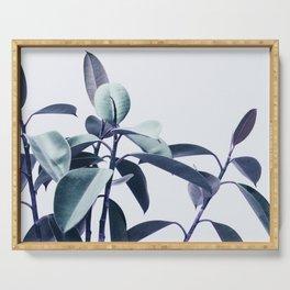 Ficus Bicolor Serving Tray