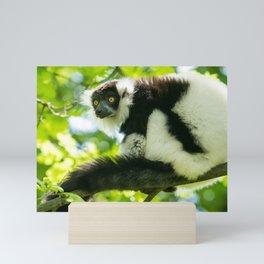 Black-and-white Ruffed Lemur Mini Art Print