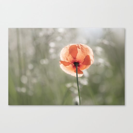 Poppy at backlight - Poppies Blossom Flower Floral Canvas Print