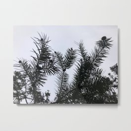 Silver Fir Abies Alba Abstract Metal Print