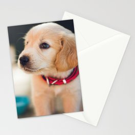Cute Labrador Puppy Red Collar Stationery Cards