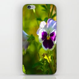 Beautiful Pansy  iPhone Skin