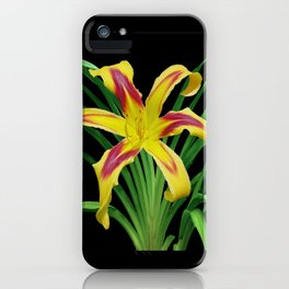 Daylily Solo - Hemerocallis 'Free Wheelin' iPhone Case
