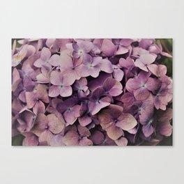 Purple Orchid flower Canvas Print