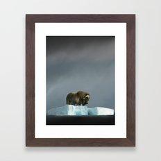 Muskox Chillin' on an Iceberg Framed Art Print