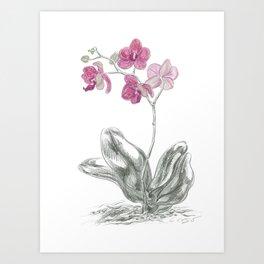 Orchid 01 Botanical Flower Art Print