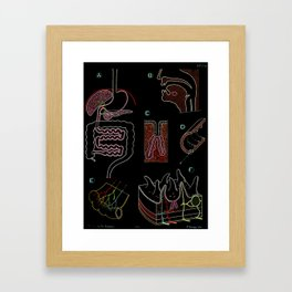 Paul Sougy: The Human Digestive System, 1957 (proceeds benefit The Nature Conservancy) Framed Art Print