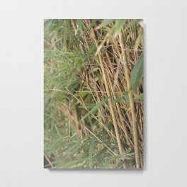 Tranquility Within The Bamboo Metal Print