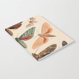 Vintage Natural History Moths Notebook