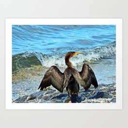 Cormorant Dries off in front of the Sea Art Print