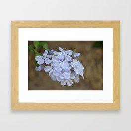 Blue Flowers Fine Art Photography Framed Art Print