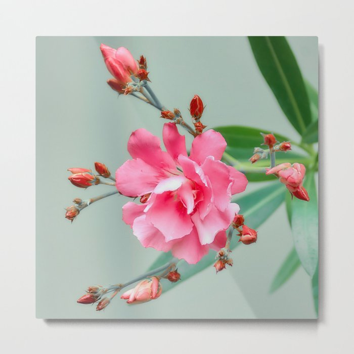 Blossom forward Metal Print