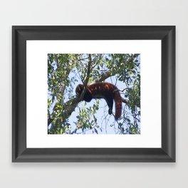 Just Hanging Around Framed Art Print