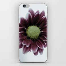 Drops on a Daisy iPhone & iPod Skin