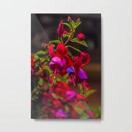 Fuchsia Dreams Metal Print