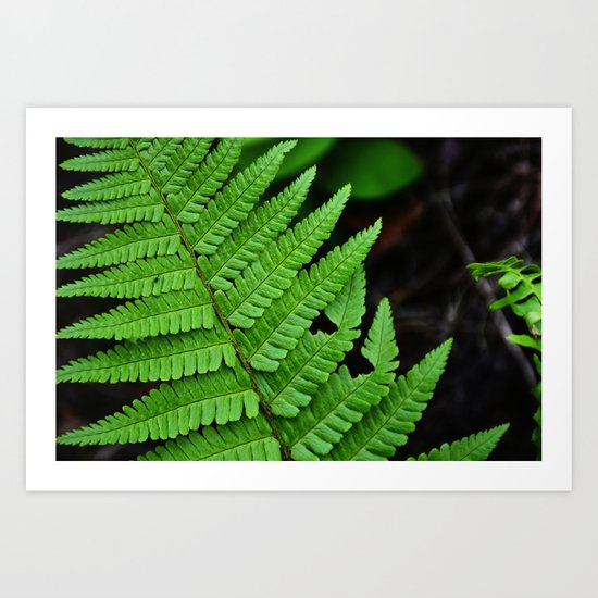 Bright Green Fern in the Forest Art Print