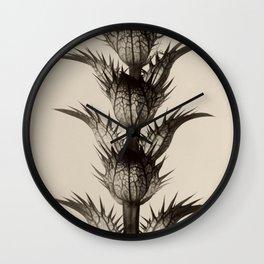 Acanthus Mollis Karl Blossfeldt Wall Clock