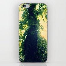 Late Summer's Tree iPhone & iPod Skin