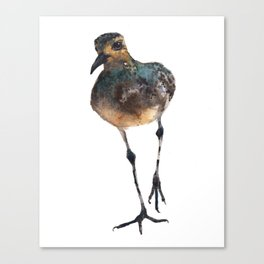 Bird Painting, plover watercolor Canvas Print