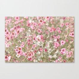 Blushing Pink Canvas Print