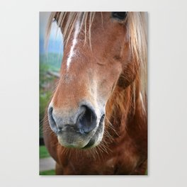 Close-up of a horse Canvas Print