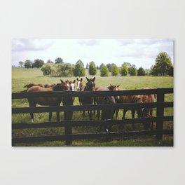 Yearlings Canvas Print