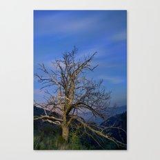Centenary Chestnut at blue hour Canvas Print