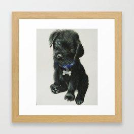 Izzy's puppy Framed Art Print