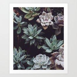 Dreamy succulents Art Print
