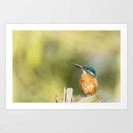 SHALLOW FOCUS PHOTOGRAPHY OF BROWN AND BLUE BIRD Art Print