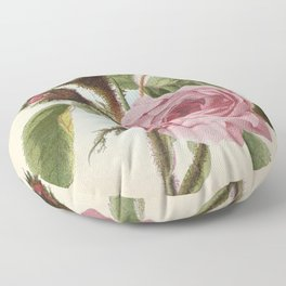 Moss Rose - Vintage Style Seed Packet Floor Pillow