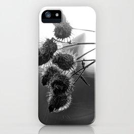 Dried burdock iPhone Case