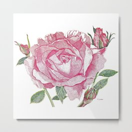 Queen Elizabeth Rose with Buds Metal Print