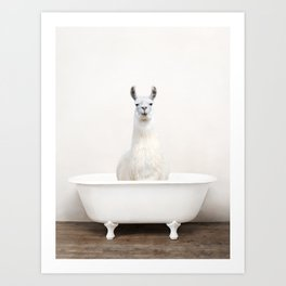 llama in a Vintage Bathtub (c) Art Print