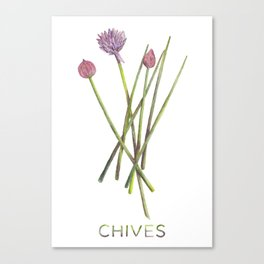Watercolor Chives Illustration Canvas Print