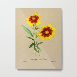 Tickseed Botanical Metal Print