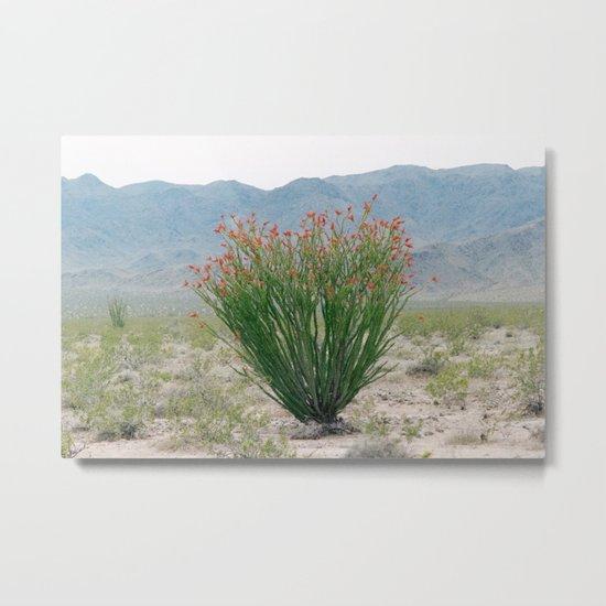 Ocotillo Plant (Anza Borrego Desert, California) Metal Print