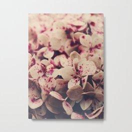 Hydrangea - Pink Freckles Metal Print
