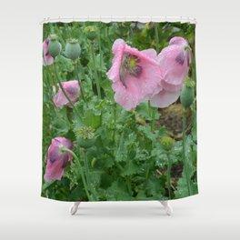 Poppies in rain Shower Curtain
