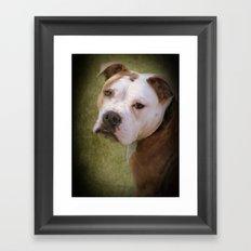 Hunde Augen Framed Art Print