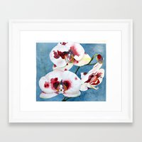 orchid Framed Art Prints featuring orchid by Natalie