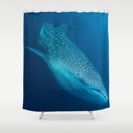 Whale shark stare Shower Curtain