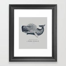 perm whale Framed Art Print