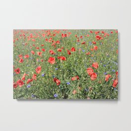 poppy flower no5 Metal Print