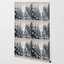 Winter Woods II - Snow Capped Forest Adventure Nature Photography Wallpaper