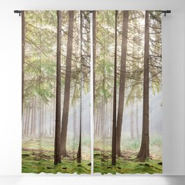 Light in the forest - North Kessock, Highlands, Scotland Blackout Curtain